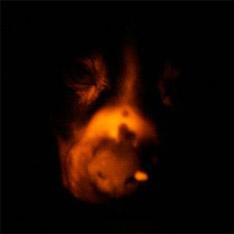 Ученые вывели светящуюся собаку