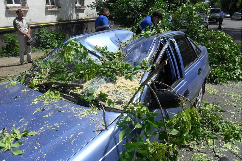 В Мичуринске дерево упало на ехавшую по улице машину