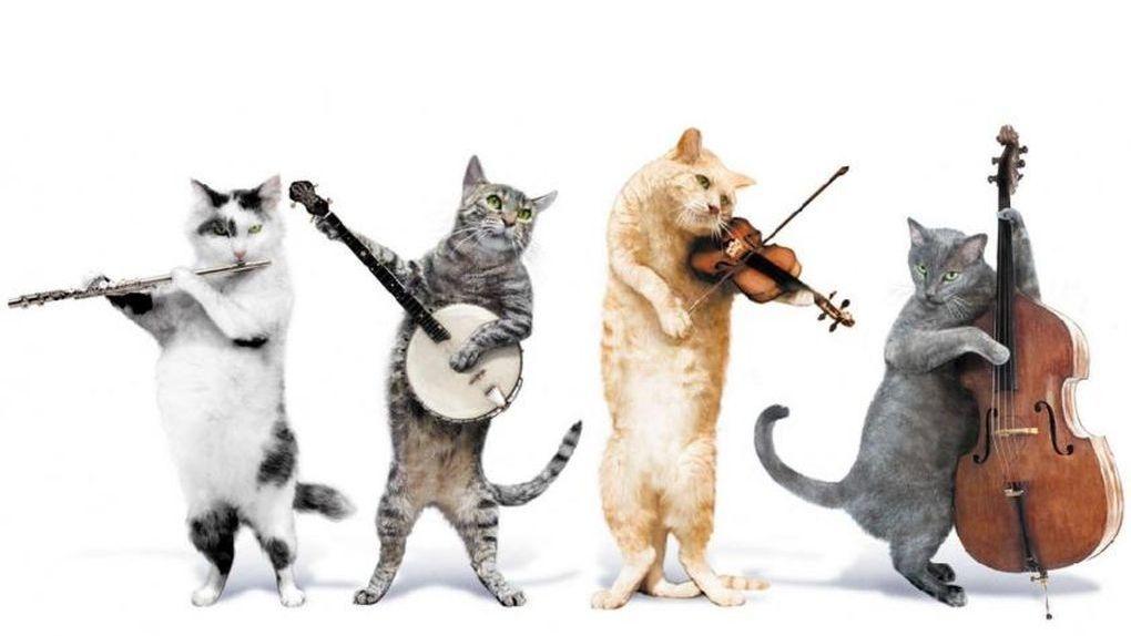Выходные в Тамбове: дикие котики, джаз и Фестиваль неваляшки