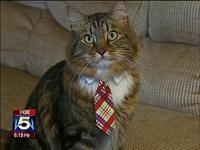 Американский кот Хэнк метит на место сенатора