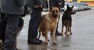 Двоих детей тамбовчанки искал весь личный состав тамбовской полиции