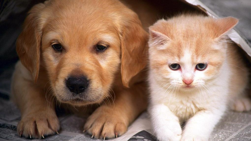 Они милые: в Тамбове пройдёт выставка-продажа котят и щенят