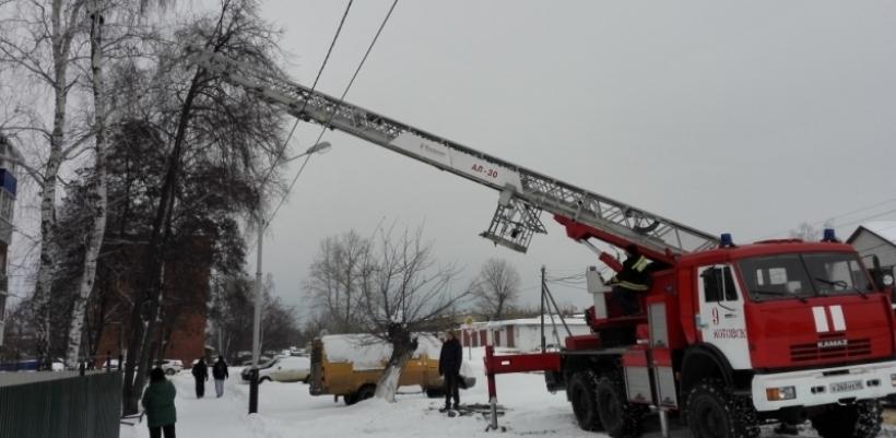 Котовским пожарным пришлось лезть на дерево за испуганным котом