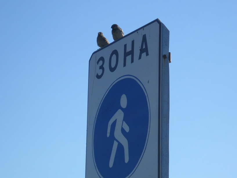 В Мичуринске появилась пешеходная зона