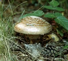 В Тамбове от отравления грибами погиб ребенок