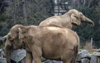 Больные слоны доведут Брижит Бардо до российского гражданства