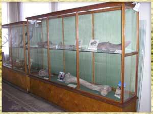 Настоящий метеорит «притягивает» в тамбовский музей посетителей