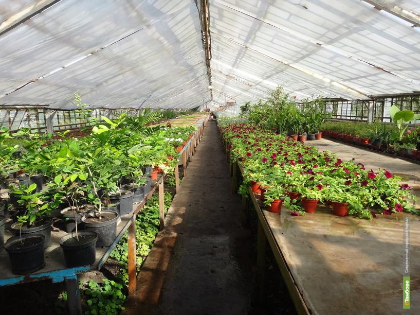 Тамбовщину признали самым экологически чистым регионом страны