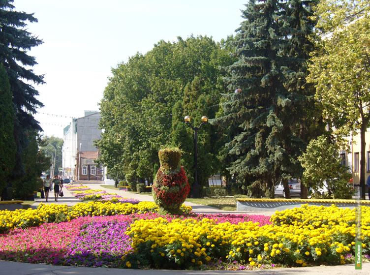Бобров покроет Тамбов цветами