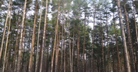 В тамбовских лесах установлен высокий класс пожарной опасности