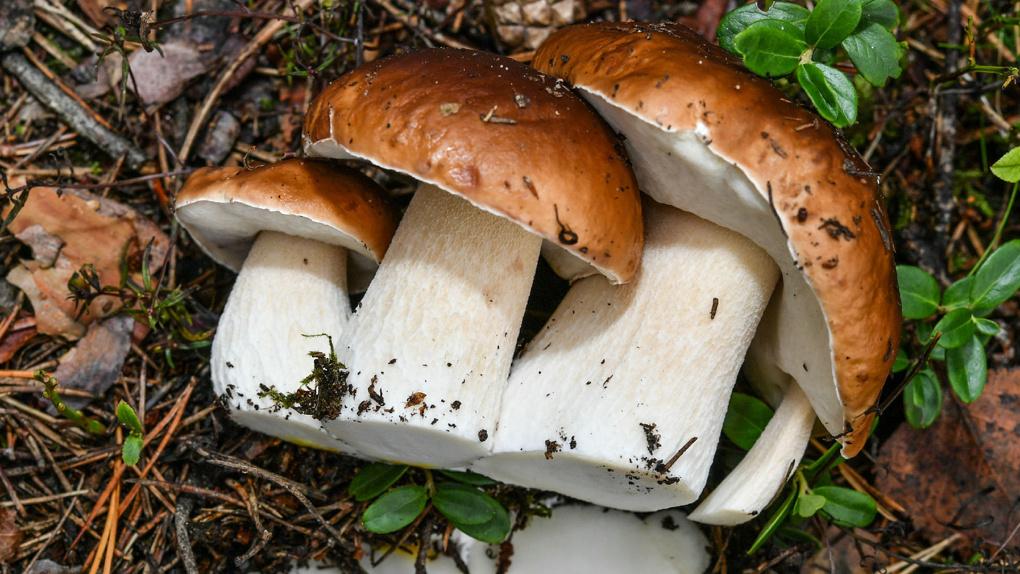 С начала года 54 тамбовчан отравились грибами