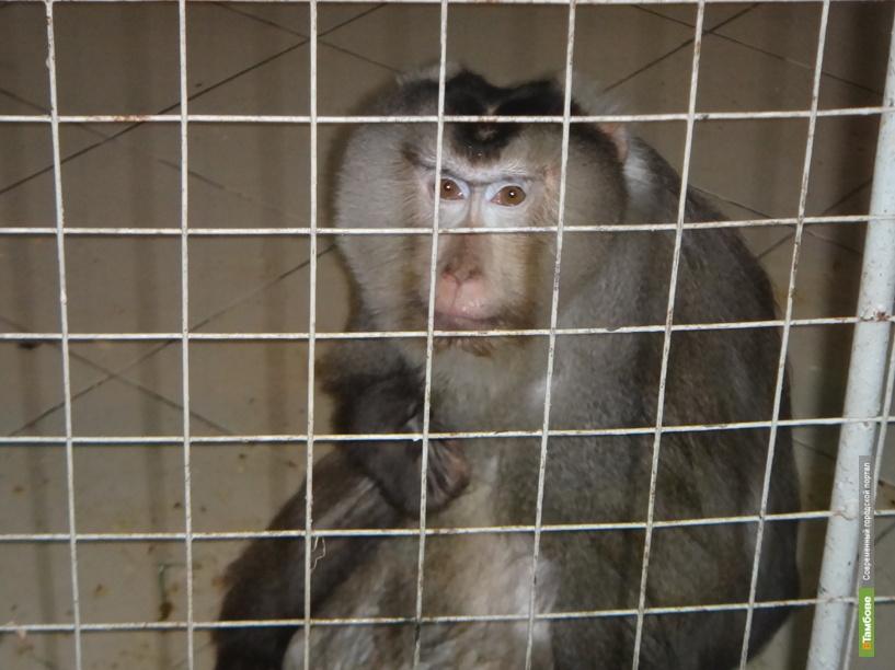 Тамбовчане вновь могут встретиться с приматами