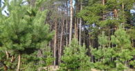 Тамбовские лесхозы заработали 450 миллионов рублей