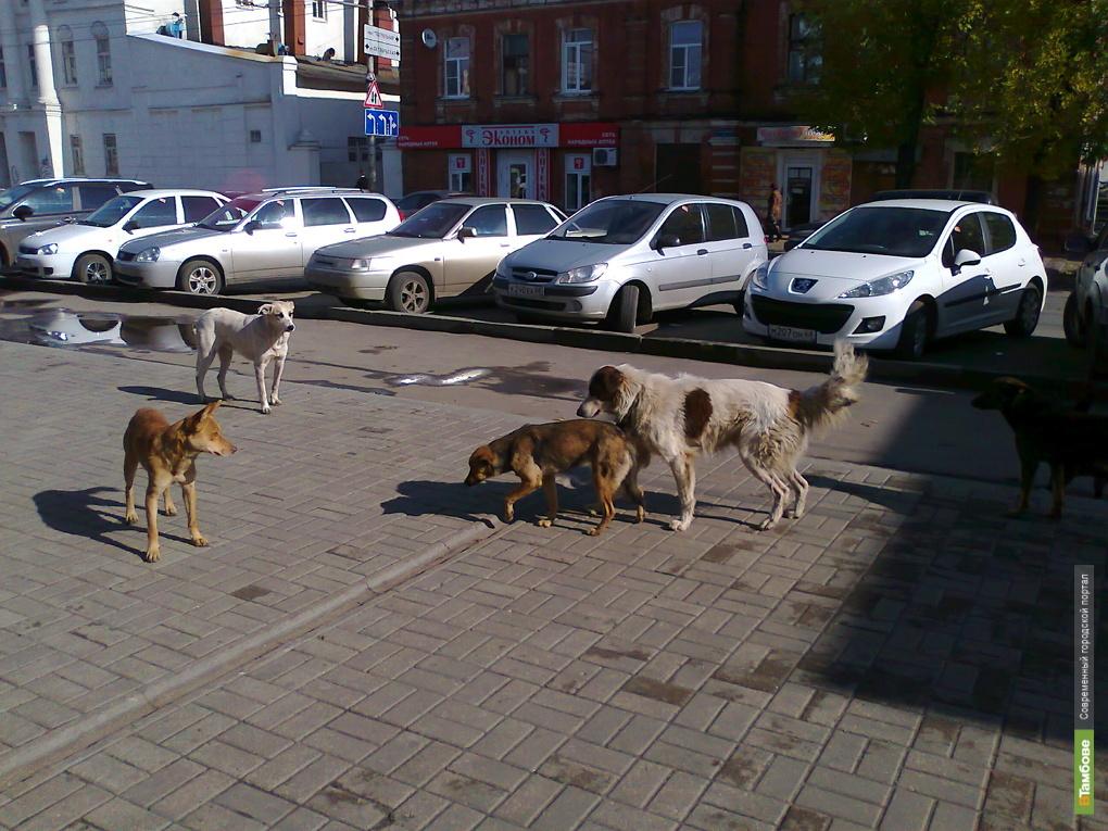 На Тамбовщине создадут группы по отлову животных