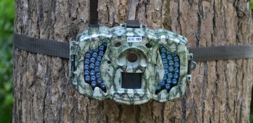 Ловить браконьеров в Воронинском заповеднике будут с помощью фотоловушек