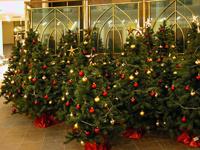 Как сохранить елку до рождества? Полезные советы