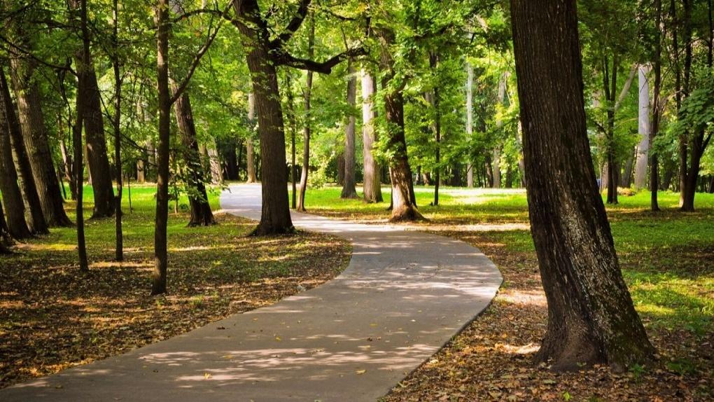 Экореновация почти за миллион рублей: в Тамбове преобразят «Южный» парк