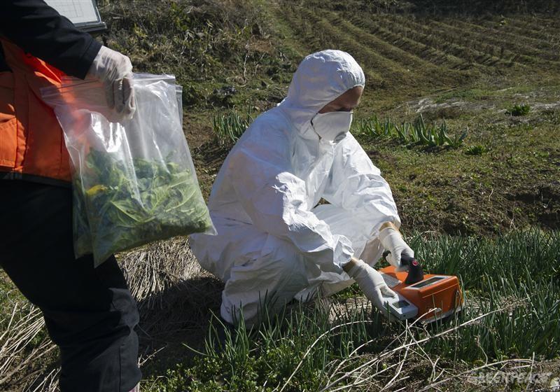 Ученые: в районе Фукусимы животные и растения генетически изменились