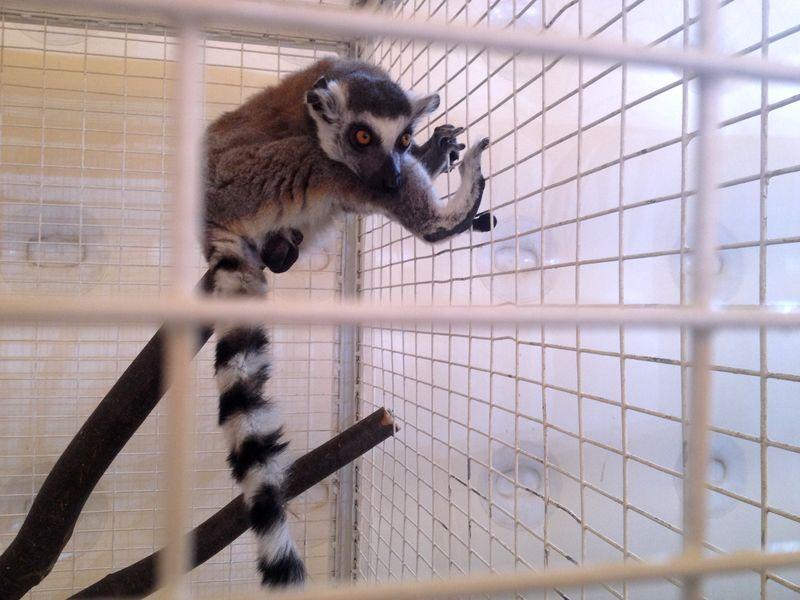 Тамбовчан приглашают познакомиться с экзотическими животными