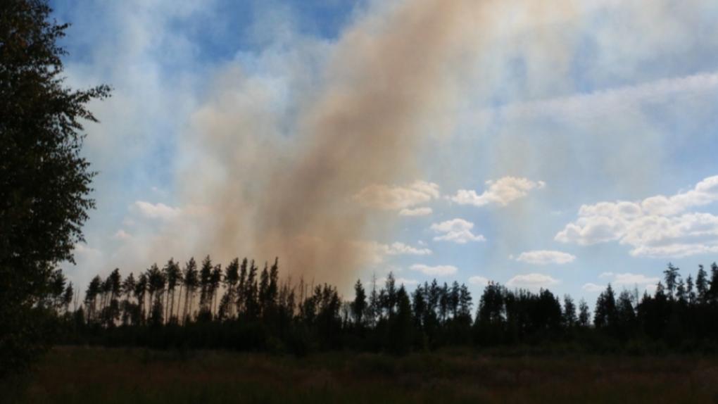 В субботу недалеко от Тамбова горела территория военного полигона