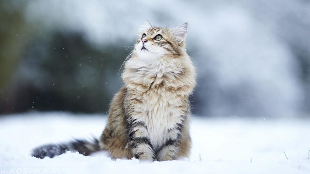 Зима не сдаётся: в Тамбовской области в ночное время ожидаются морозы до -10