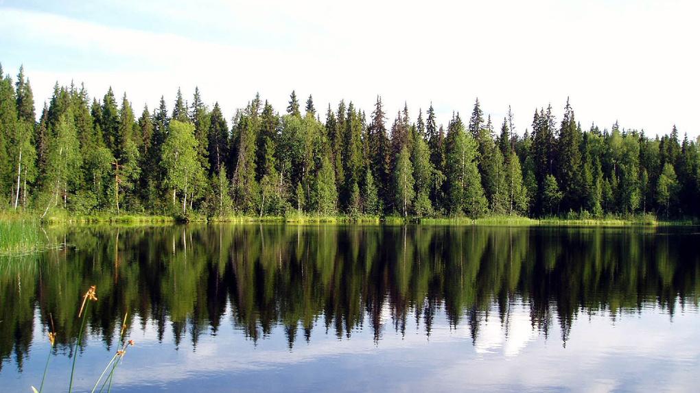Итоги Года экологии: в Тамбове берегут зелёные лёгкие планеты