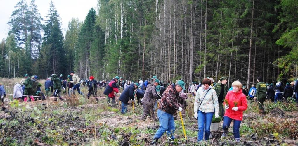 В лесах региона высадили несколько сотен молодых деревьев