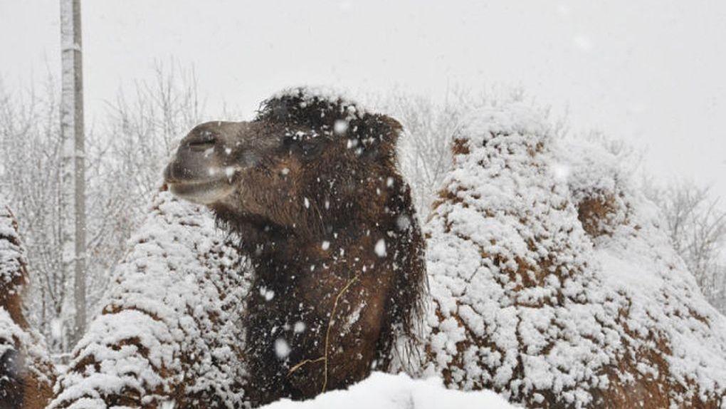 Тамбовский зоопарк не работает с зимы