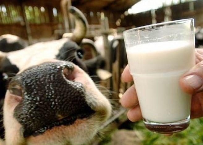На Тамбовщине появятся два современных молочных комплекса
