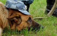 За охрану общественного порядка будут отвечать собаки