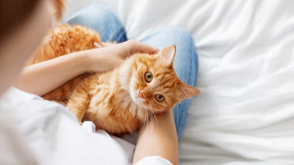 Кошки-доктора: учёные выяснили, от каких болезней спасают домашние питомцы