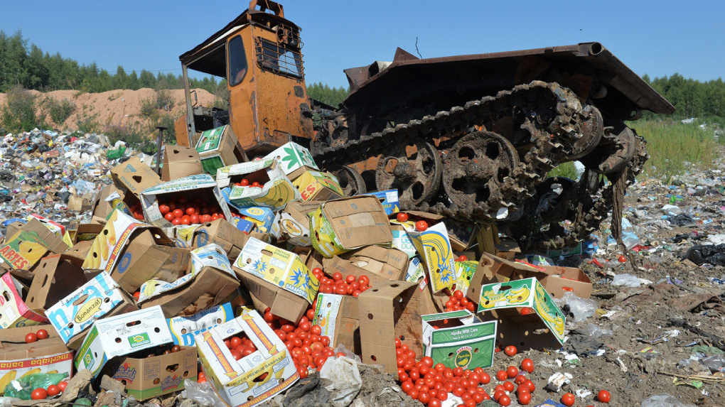 Дави их: на Тамбовщине нашли турецкие томаты