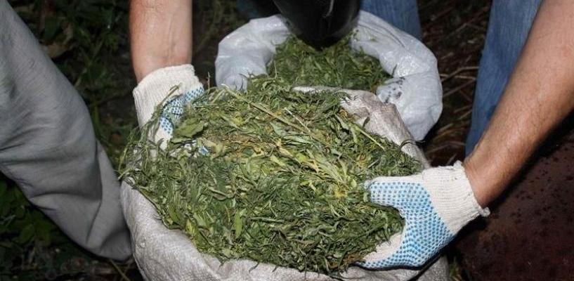 Тамбовские полицейские изъяли более 8 килограммов марихуаны