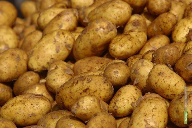 В тамбовскую картошку вложат 700 миллионов рублей
