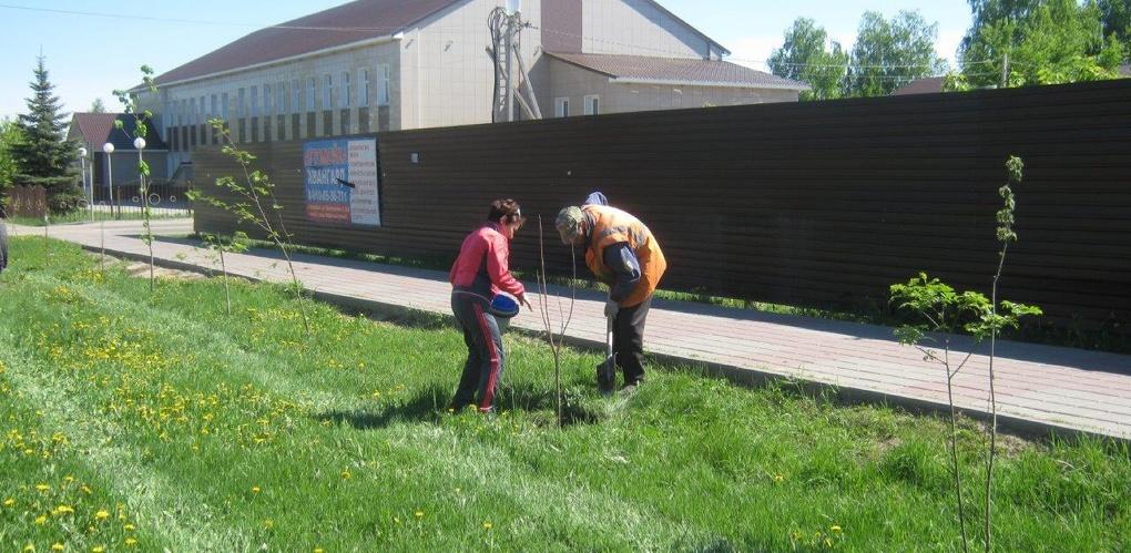 Рассказовцы высадили более ста деревьев, подаренных Тамбовским лесничеством