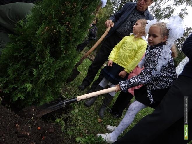 Тамбовские школьники вырастили почти триста тысяч деревьев
