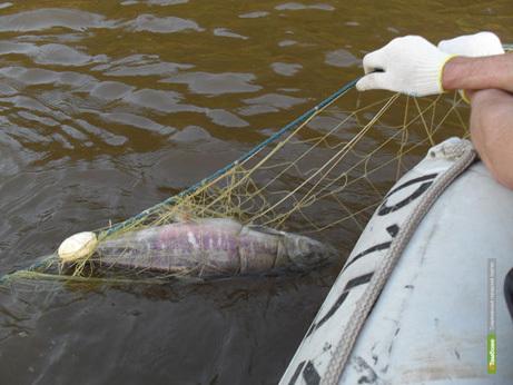 Тамбовские рыбаки предложили Рыбнадзору запретить продажу сетей