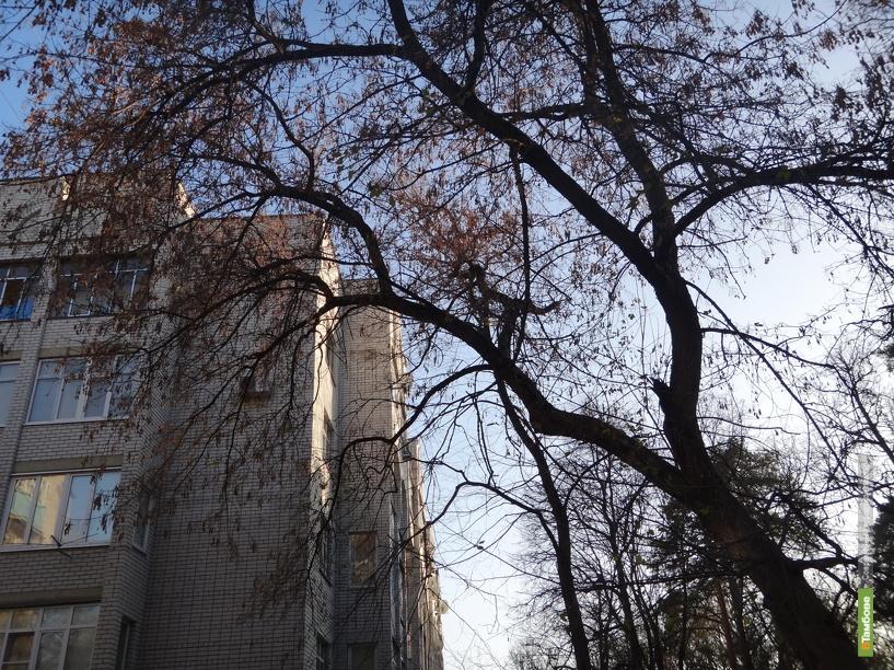 Тамбовчане тщетно просят власти спилить старые деревья