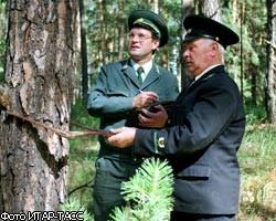 Тамбовские лесники поедут на Всероссийский форум