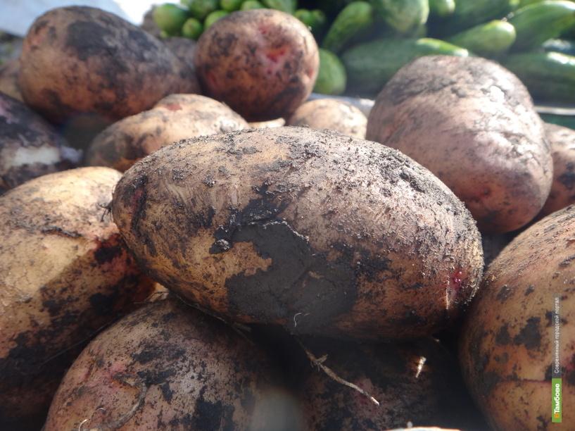 В Мичуринске будут полировать морковь и картошку