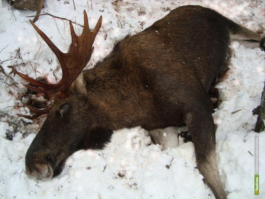 На Тамбовщине поймали браконьера