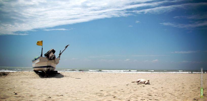 Алеся Романова: Индия. Волшебные каникулы в Гоа