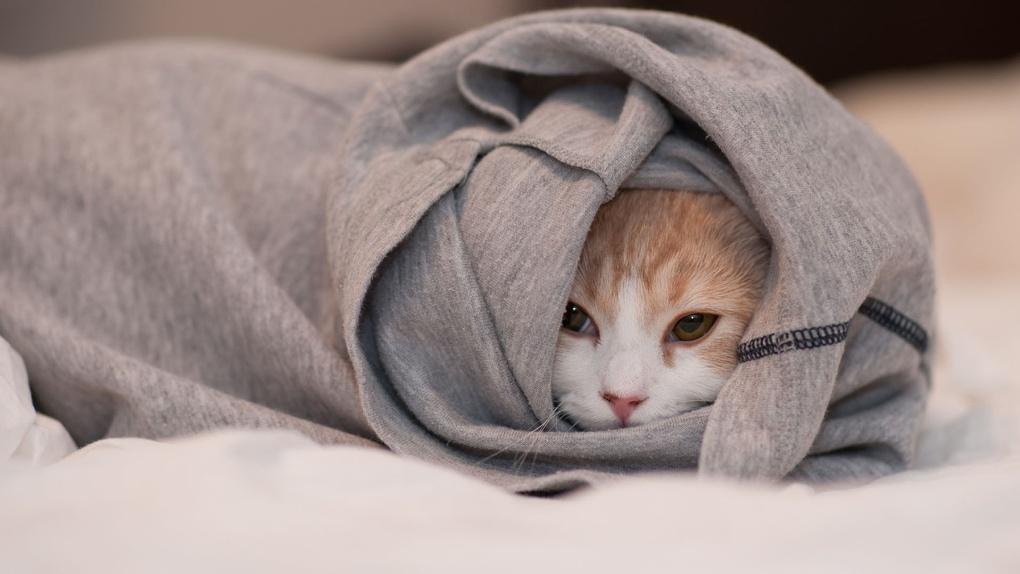 На Тамбовщине ожидаются ночные заморозки: тёплые вещи убирать рано