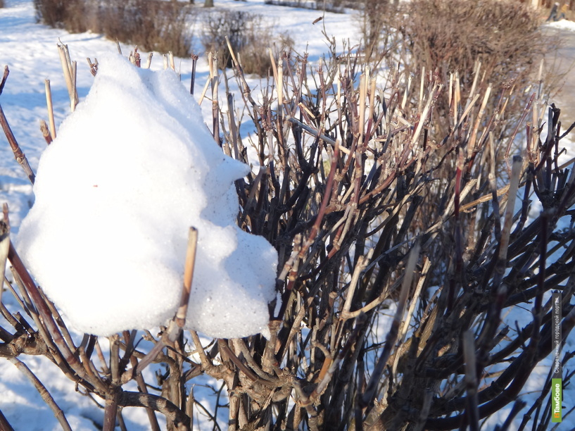 На смену морозам в Тамбов придут снег и метели