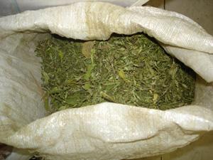 Наркополицейские Тамбовщины за неделю изъяли 10 килограммов марихуаны