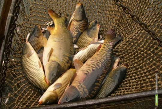 На одном из тамбовских водоемов орудовали браконьеры