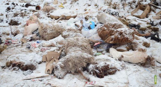 Прокуроры закрыли животноводческое предприятие