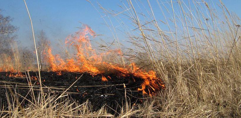 В области за сутки пожарные 47 раз выезжали на тушение горящей травы