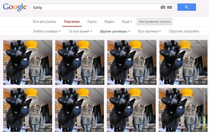ВТамбове снимает с «Котофотоконкурса» нескольких участников