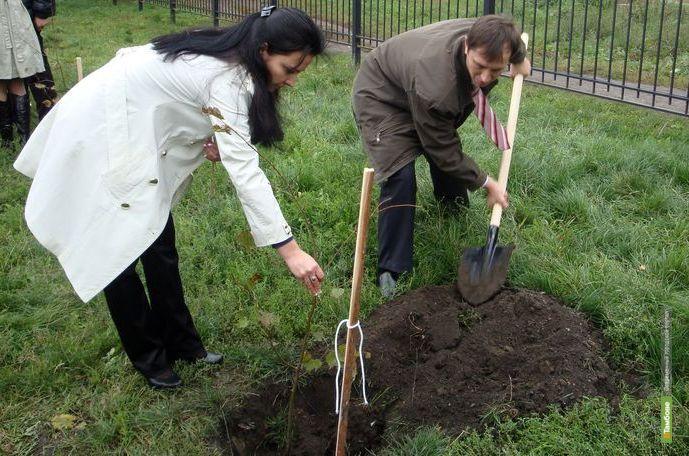 Губернатор посадит каштаны под Тамбовом